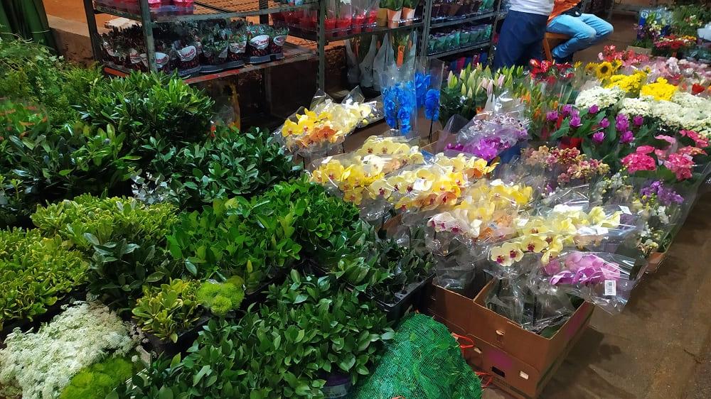 Foto de plantas em caixas no chão na Feira de Flores do CEAGESP