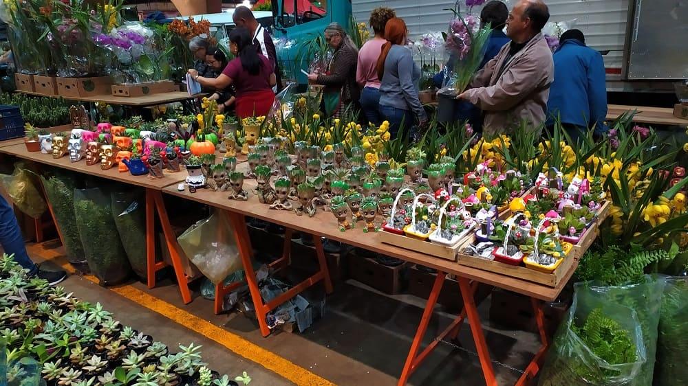 Mesa na Feira de Flores do CEAGESP com uma infinidade de vasinhos decorados com suculentas e cactos