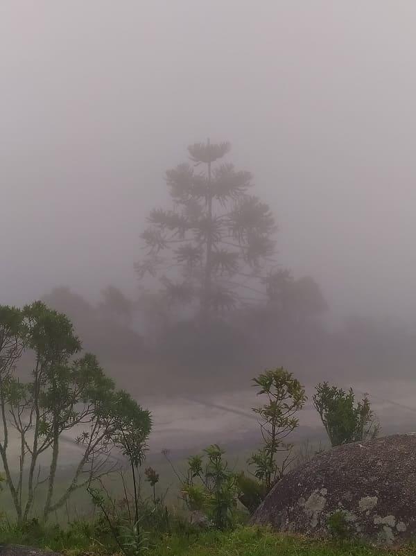 Vista da Pedra da Macela, com algumas árvores no primeiro plano e, ao fundo, a silhueta de uma árvore maior coberta pela neblina
