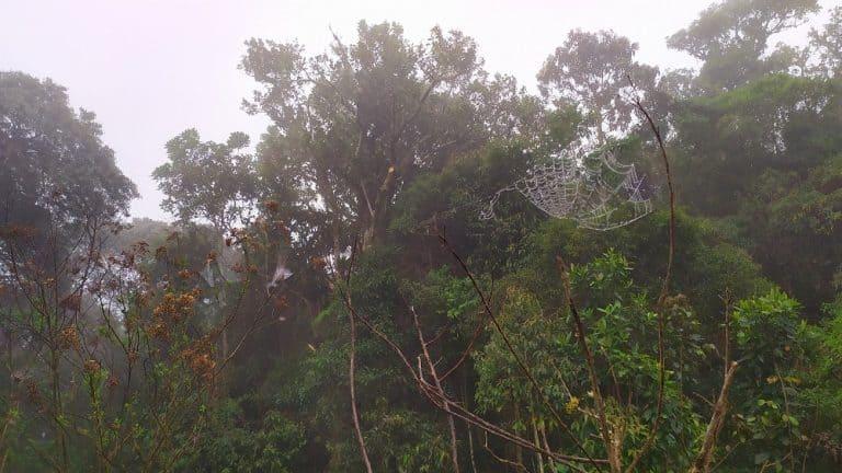 Foto com o céu nublado e árvores ao fundo, com o foco em uma teia de aranha cheia de gotinhas de água