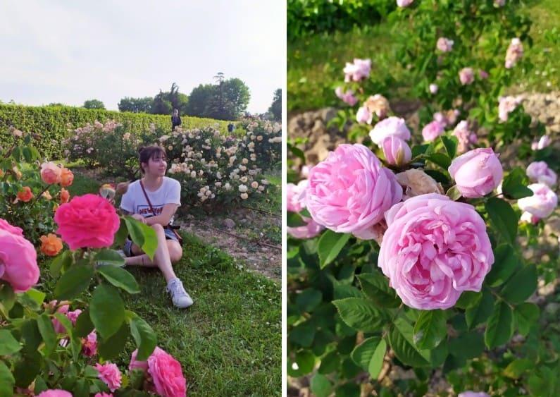 À esquerda, mulher sentada entre as flores no Roseto di Santa Giustina em Pádua; À direita, zoom em uma rosa cheia de pétalas rosa clara